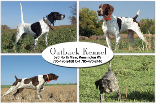Outback Kennels Hunting Dogs